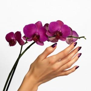 Beautiful hand touching orchid